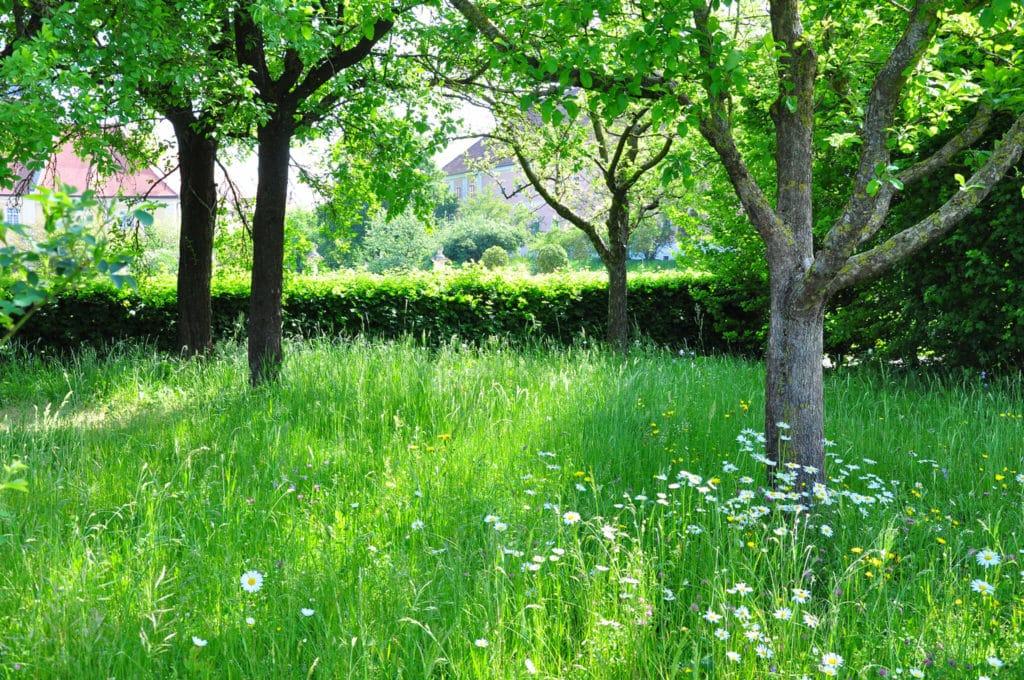 Obstgarten im Stift Seitenstetten