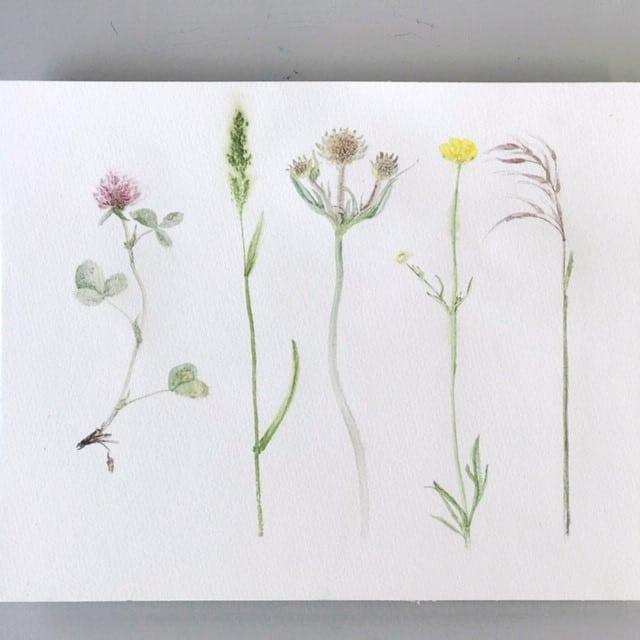 Mariana Nikolai - Aquarellmalerei von Pflanzen